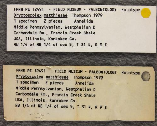 PE12491_fossil2