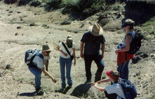 Hell Creek Formation Collecting
